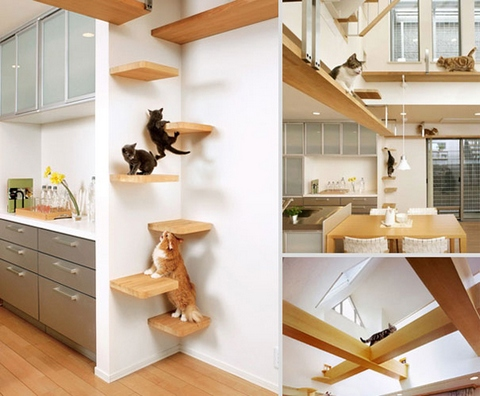 Give your cats plenty of climbing places