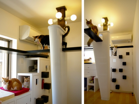 Your home a cat haven