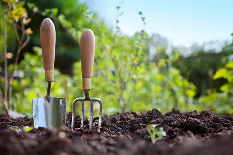 Gardening trowel and garden fork, in garden soil
