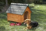 Guide to Building a Dog House