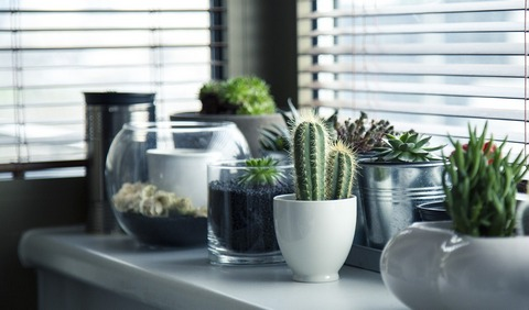 Plants and pots for home decor