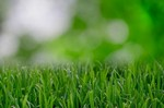 How to Grow Green and Lush Lawn
