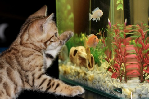 Fish aquarium attracts attention