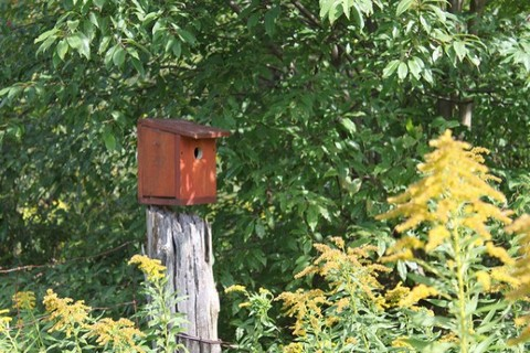 A bird box in bushes