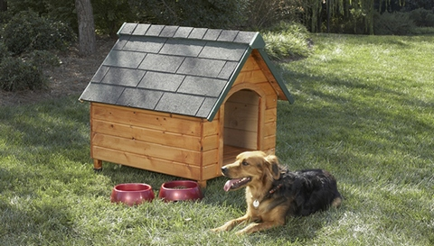 A dog on a green lawn in front of a dog house