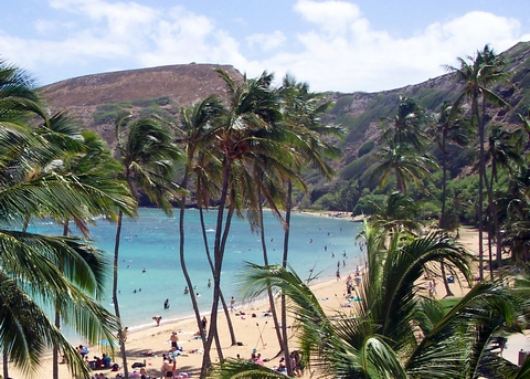Tropical palms beach in Hawaii